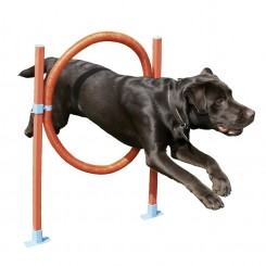 Agility hop forhindring ring